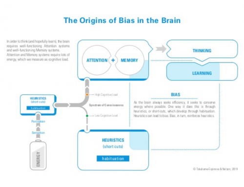 Origins of bias in the brain